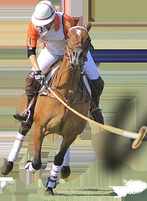 Active 20 Polo Denver Children's Benefit 30 Schomp Classic Bmw To uTJ3lFK1c5