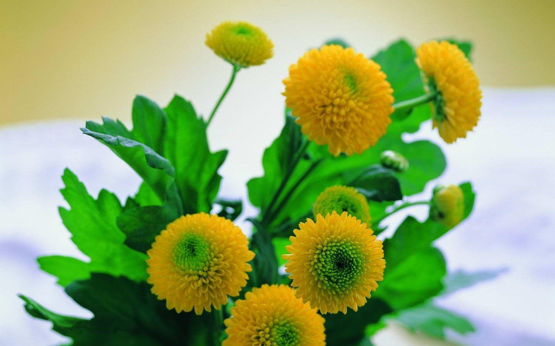 flowers marigold nature wallpaper (#402500) / Wallbase.cc