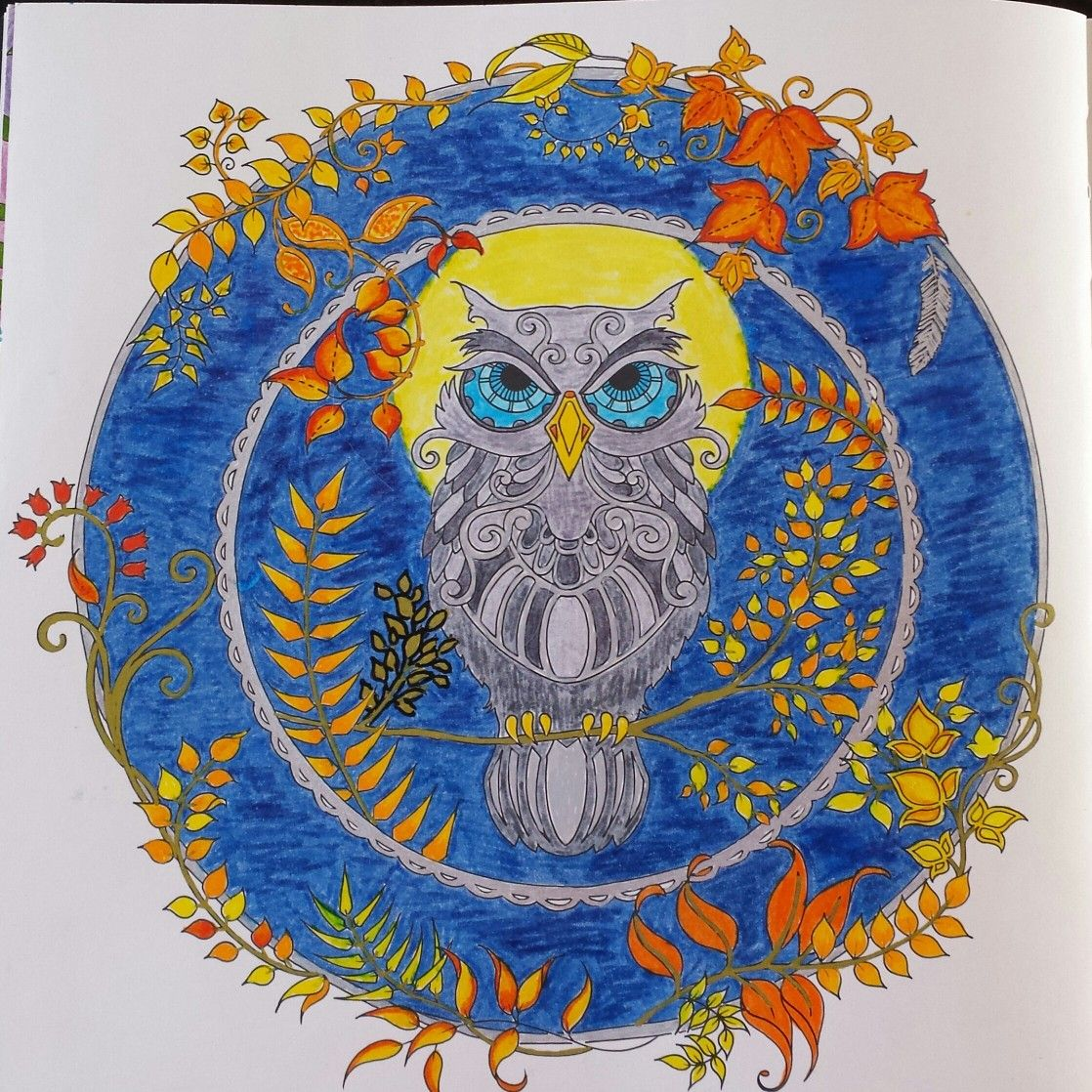 Johanna Basford Owl Eule Enchanted Forest Coloring
