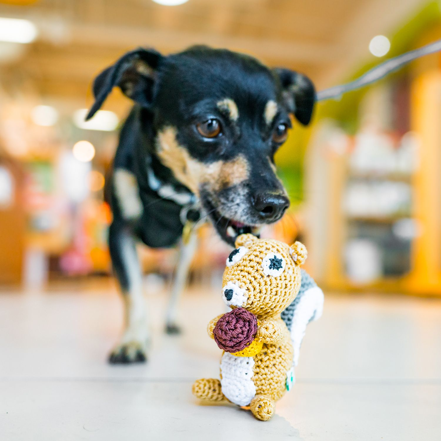 Shop Dogo S Squirrel Toy At Your Local Healthy Spot Today Shop