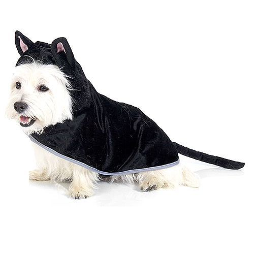 An image of a fluffy white dog in black cat costume, providing much joy.