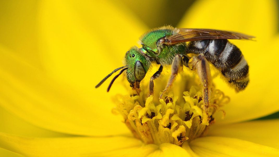 Doctors find four bees living inside womans eye and