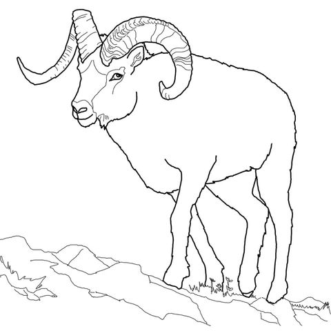 Dall Sheep Coloring Page Coloring Pages Sheep Cartoon Free