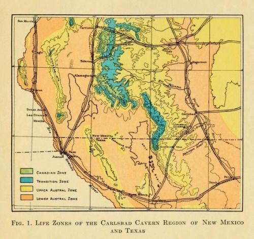 Fig. 1. Life zones of the Carlsbad Cavern region of New Mexico and ...