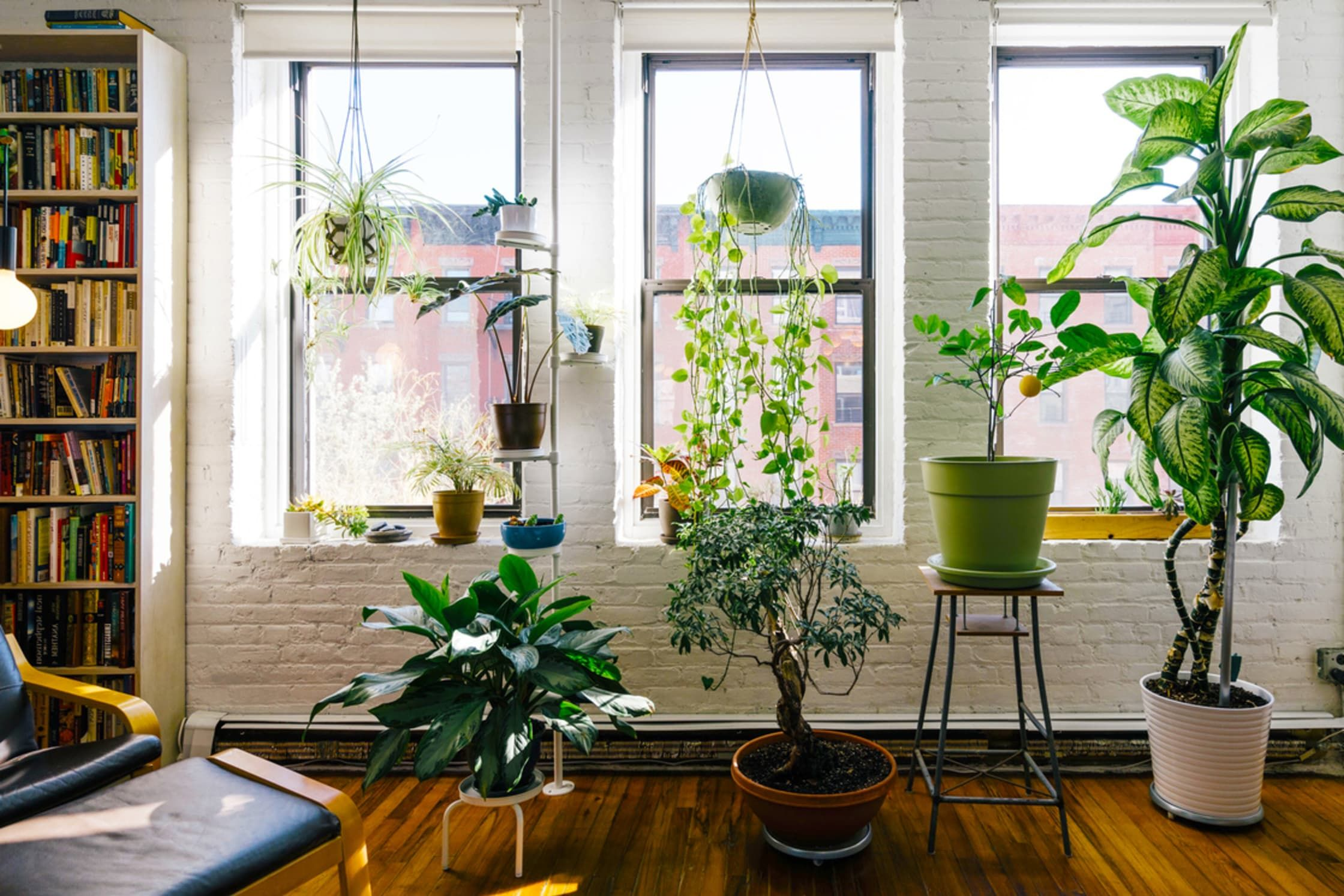 15++ Feng shui living room do s and don ts ideas