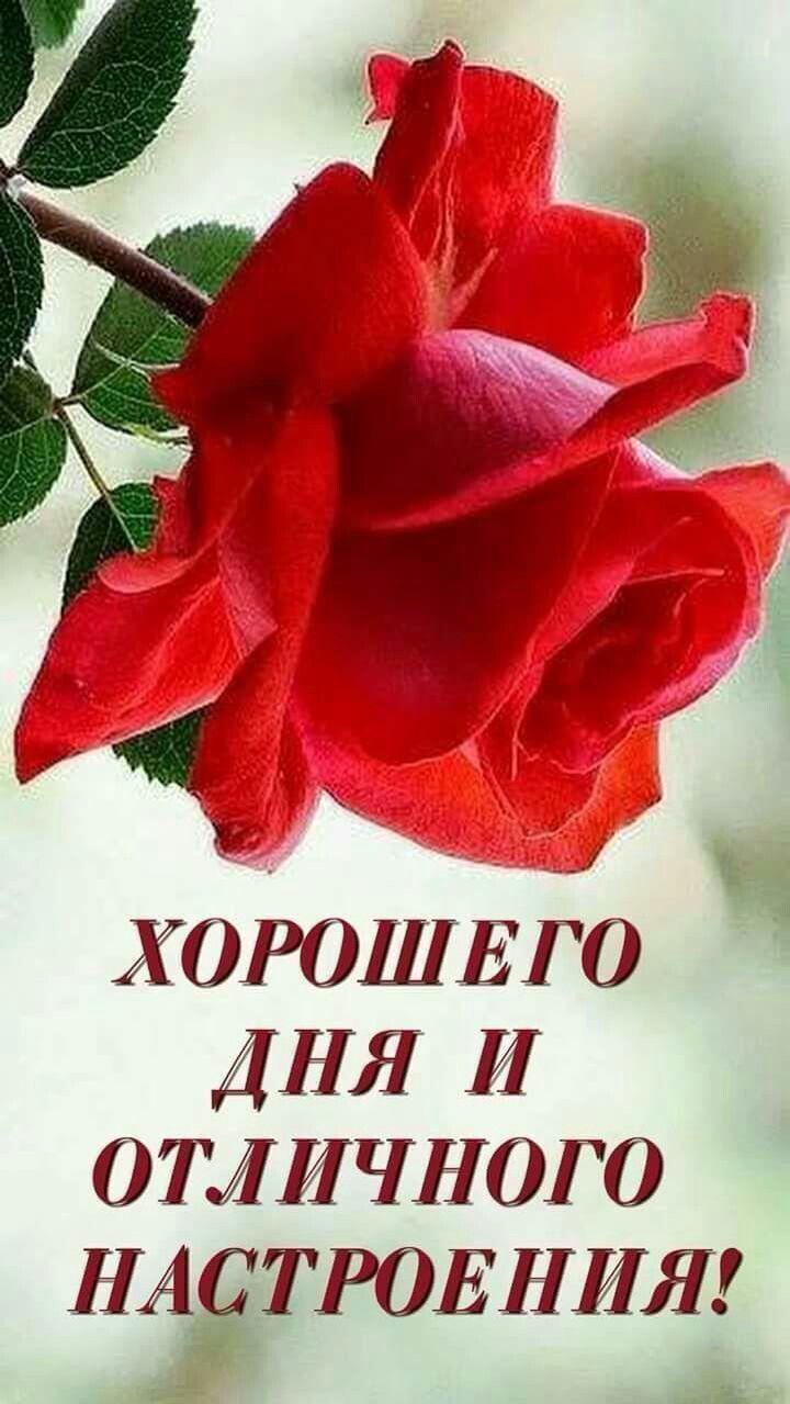 Пин от пользователя Ольга Ольга на доске Доброго дня | Благодарные цитаты,  Радужные розы, Праздничные открытки