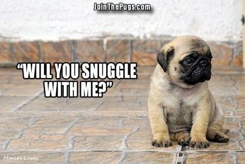 Snuggle Pug - Join the Pugs