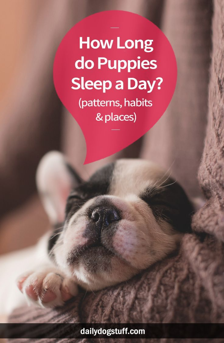 How Long do Puppies Sleep a Day? (patterns, habits