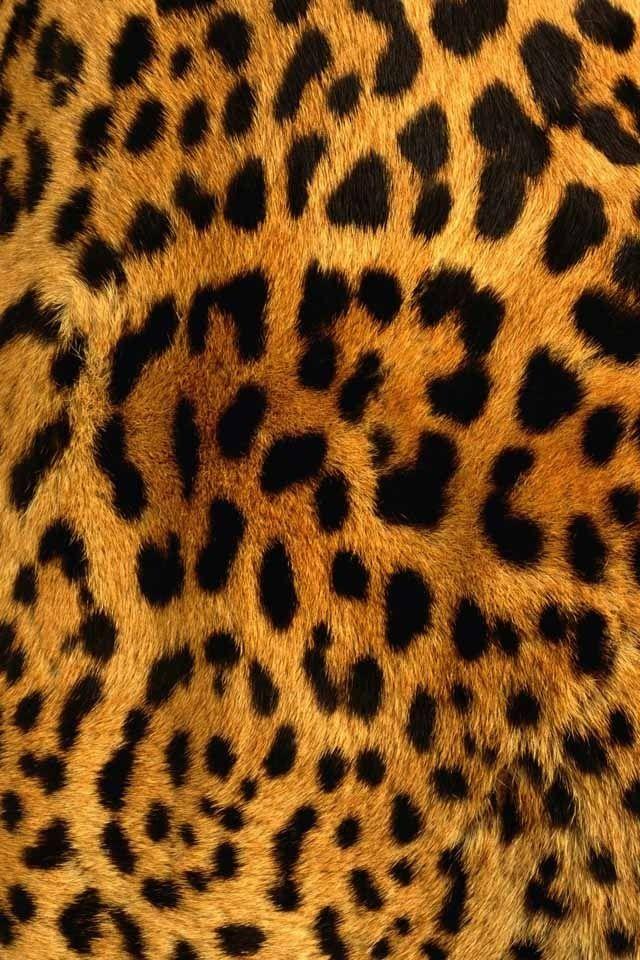 I live chetta print gotta love it pinterest cheetah for Leopard print wallpaper