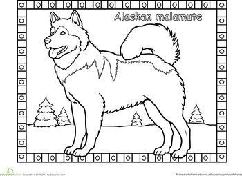 The Alaskan Malamute is named after the Inuit tribe Mahlemuts