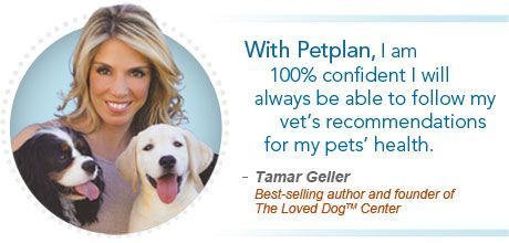 See Why Tamar Geller Recommends Petplan To Her Clients Dog