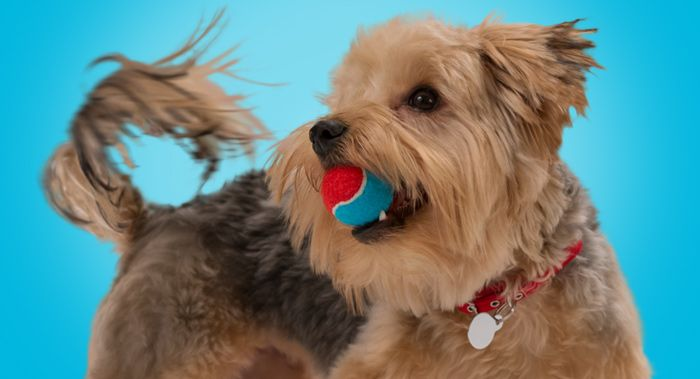 Make Homemade Dog Toys – Banfield Pet Hospital®