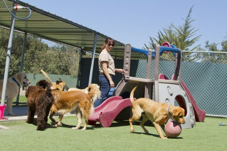 How to choose a safe kennel or daycare dog boarding
