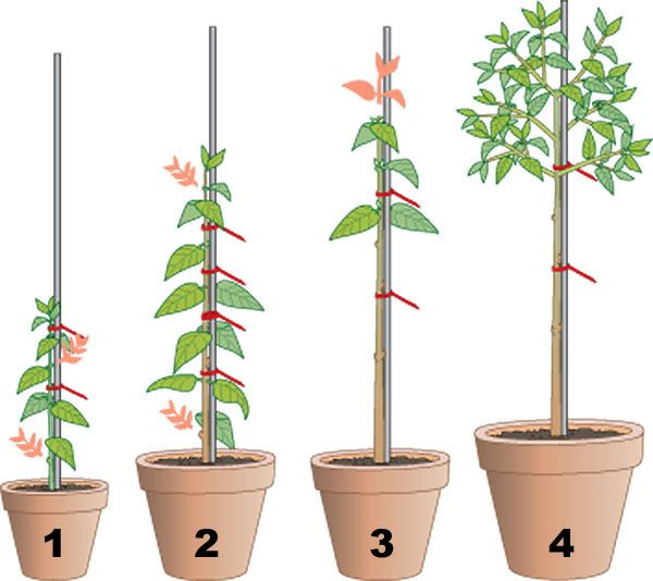die besten 25 pflanzenableger ideen auf pinterest pflanzen vermehrung nutzpflanzen anbau und. Black Bedroom Furniture Sets. Home Design Ideas