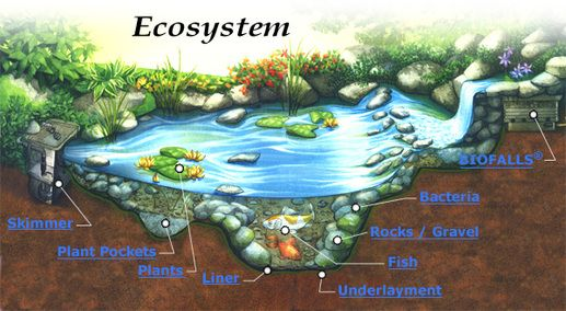 The picture above illustrates a simple ecosystem being a ...