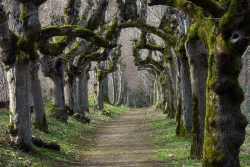 landscapelifescape:  Schloss Warthausen, Baden-Württemberg, Germany Wonderful Willows by Katzilla13