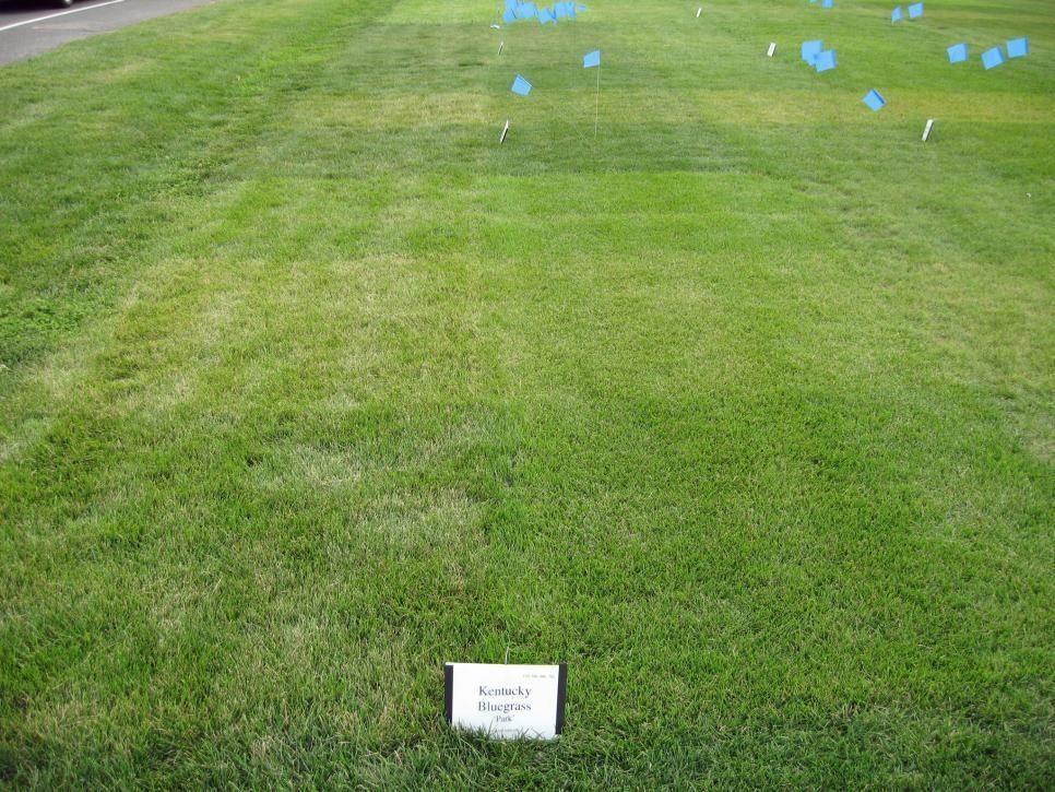 20 garden edging ideas for lawn borders 1000 in 2020