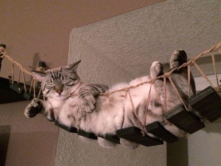 Hängematte für Katzen