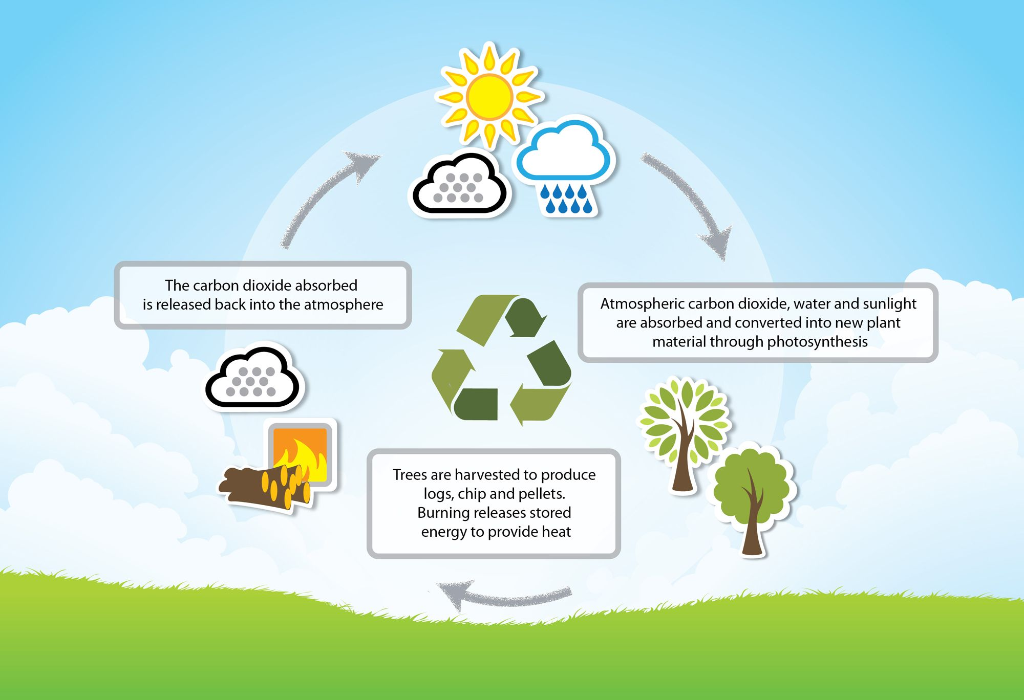 Biomass A Renewable Energy Source Or A Danger To The