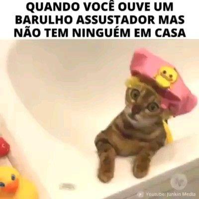 Photo of Gatinho
