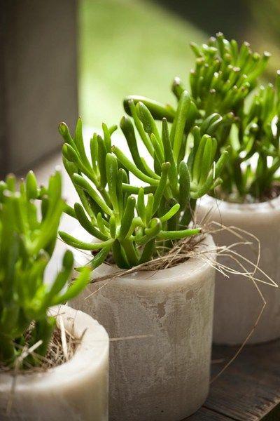 10 lättskötta grönväxter | Blomsterlandet.se
