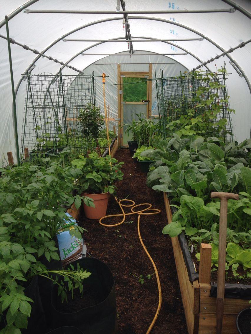 My poly tunnel 1000 in 2020 Diy raised garden
