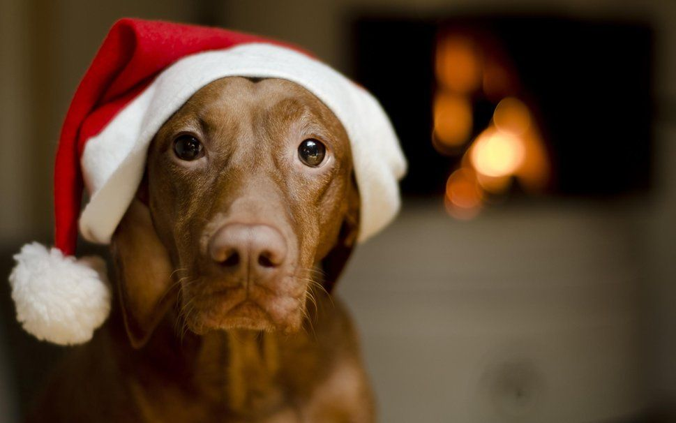 Download your favorite Christmas dogs wallpaper from our list ...