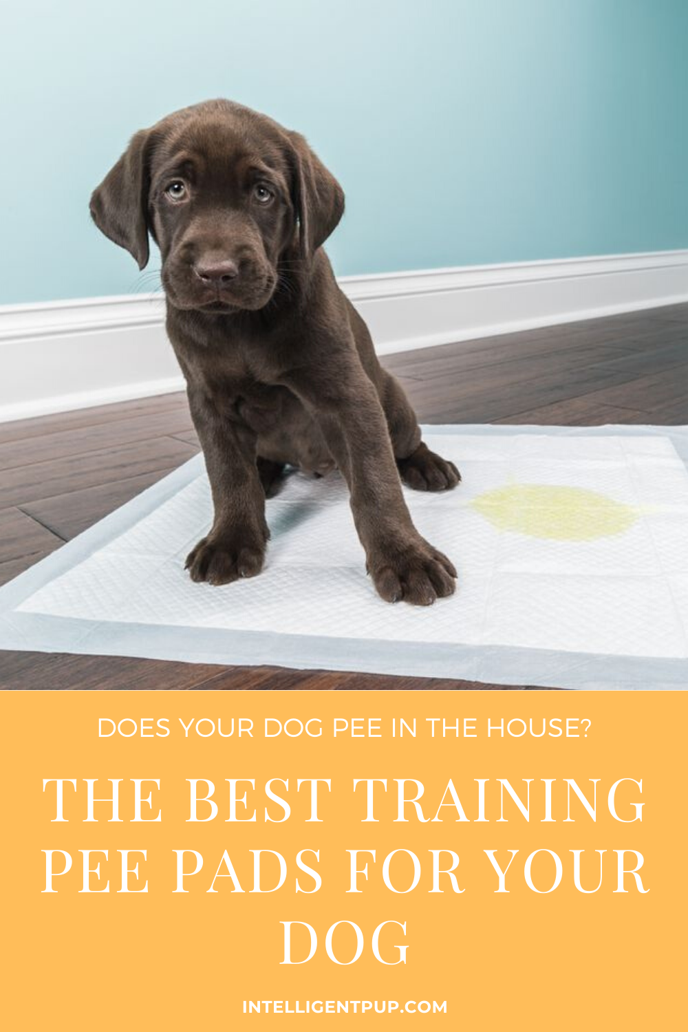 Best Training Pee Pads For Your Dog In 2020 Dog Pee Dog Pee Pads Indoor Dog Potty