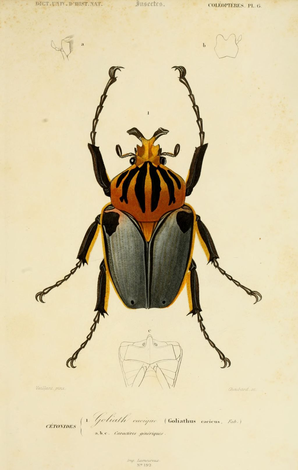 Les 25 meilleures id es de la cat gorie dessin insecte sur - Dessin d insectes a imprimer ...