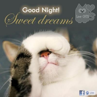 De Poezen Shop La Boutique Des Chats Good Night Cat Good Night Friends Nighty Night