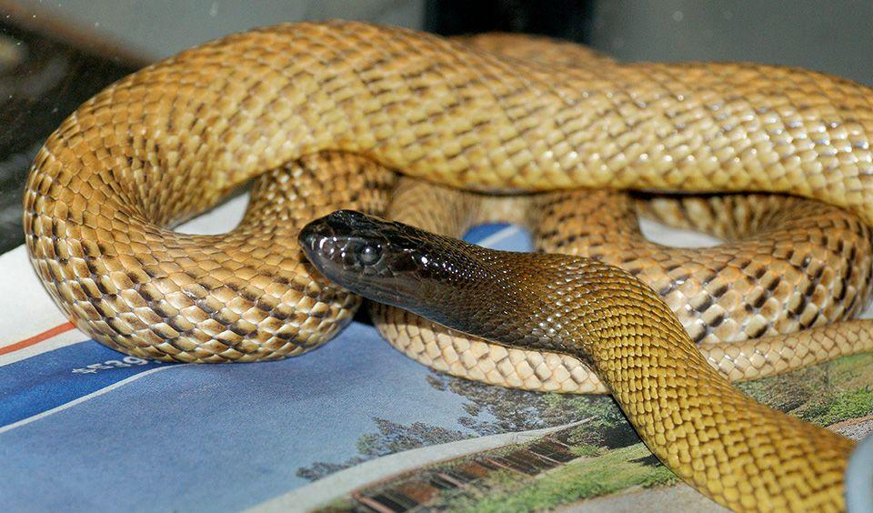 Top 10 most venomous animals in Australia Australia