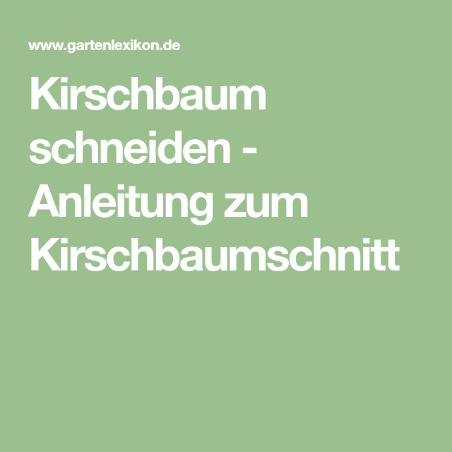Kirschbaum Schneiden Anleitung Zum Kirschbaumschnitt
