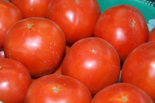 Growing Tomatoes - The Top Ten Tips