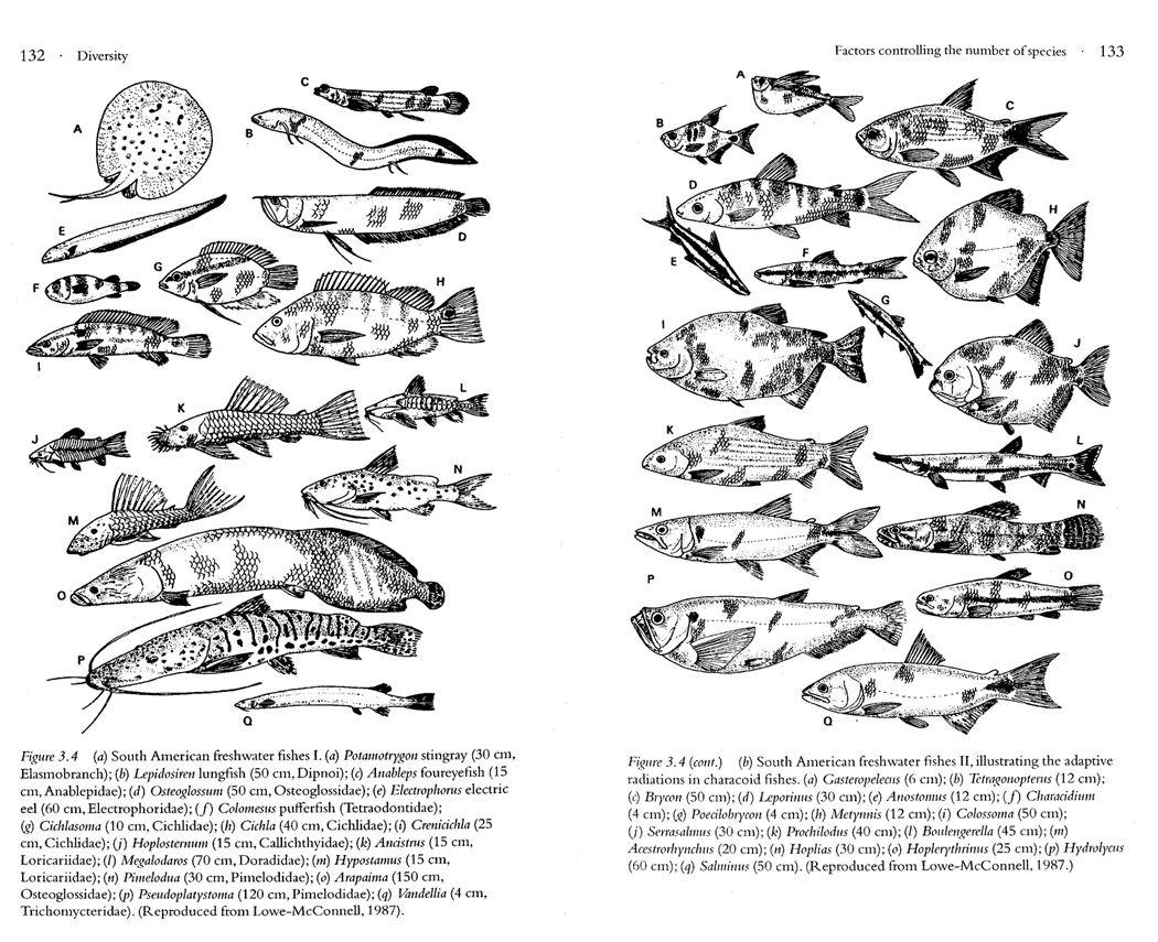 Freshwater fish diversity - Amazonian Fish Diversity