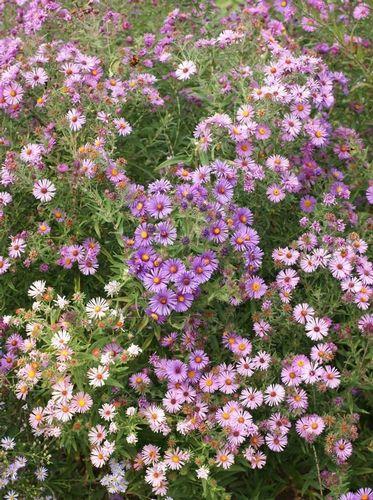 Wildflowers of New England » Arnold Arboretum