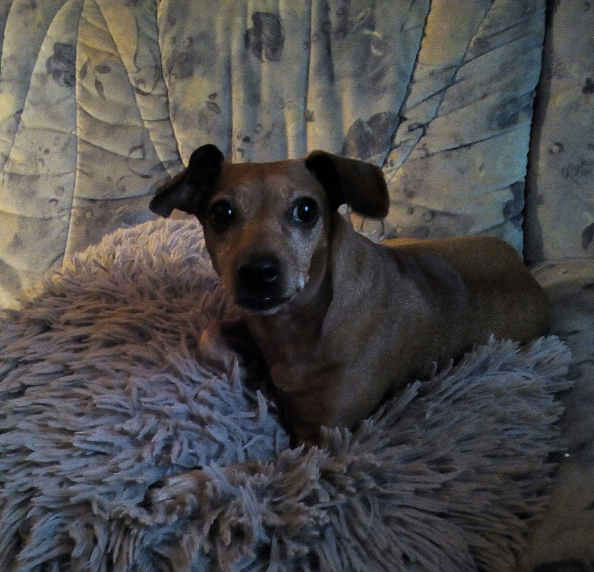 Pin von Ich liebe Hunde auf Hunde Fotos Hunde fotos