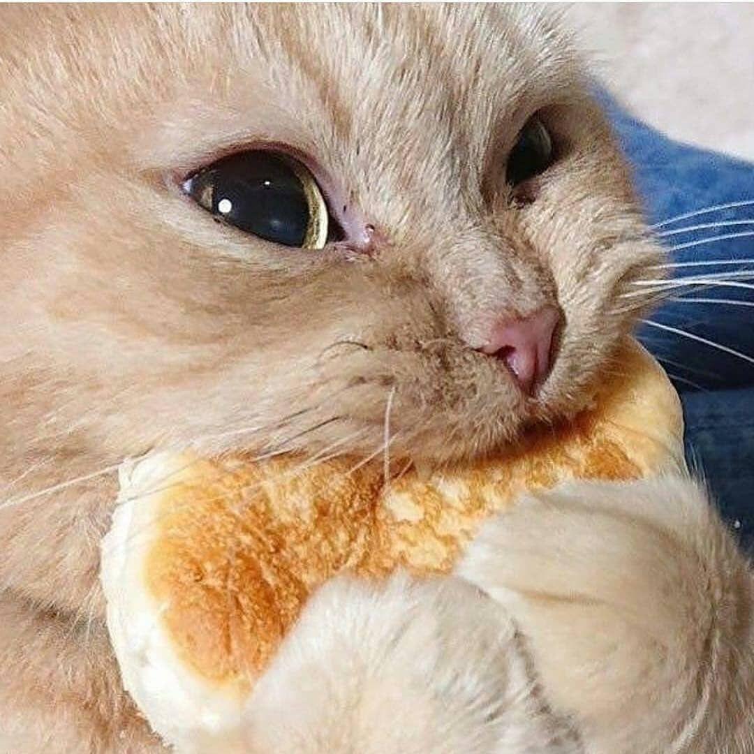 Animal Planet Cute Animals On Instagram Follow Animaljustt Photo Syannpon Tw Cats Kittens Ani Cute Animals Cute Baby Animals Cute Cats