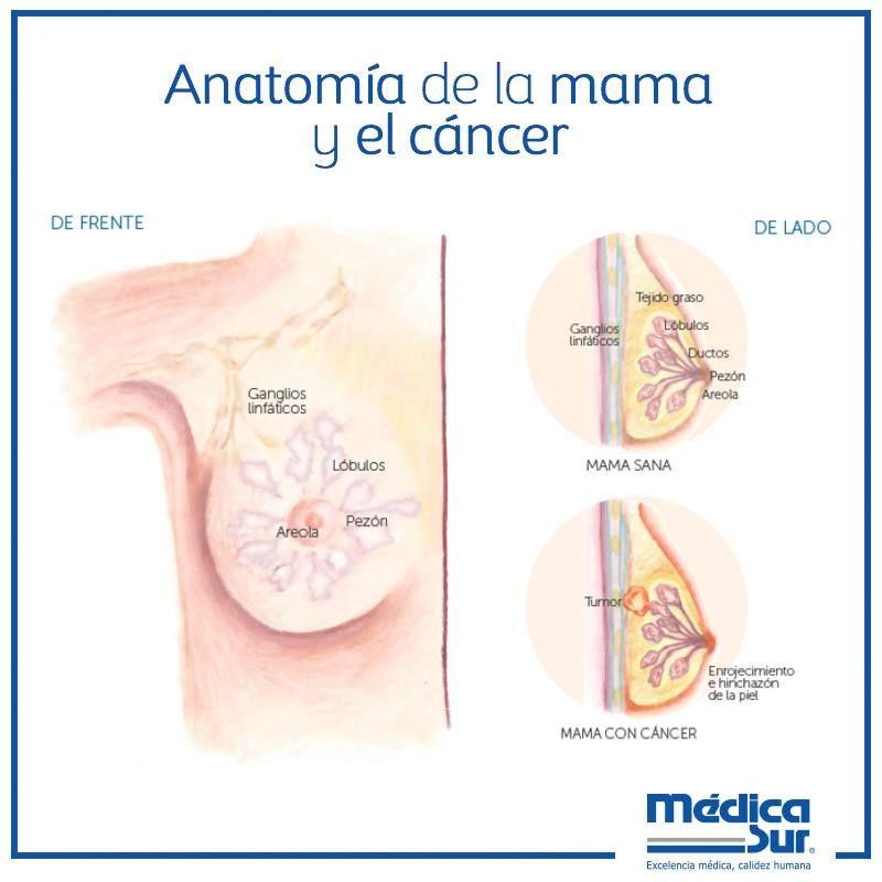 Único Anatomía Masculina Pezón Friso - Anatomía de Las Imágenesdel ...