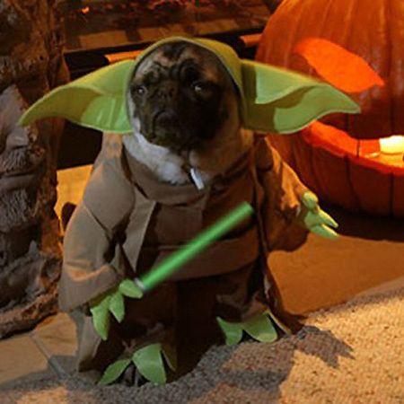 Animals In Star Wars Costumes Dog Costumes Funny Yoda Dog