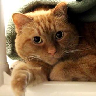 Adopt A Pet Petsmart Charities In 2020 Pet Id Pets Pet Adoption