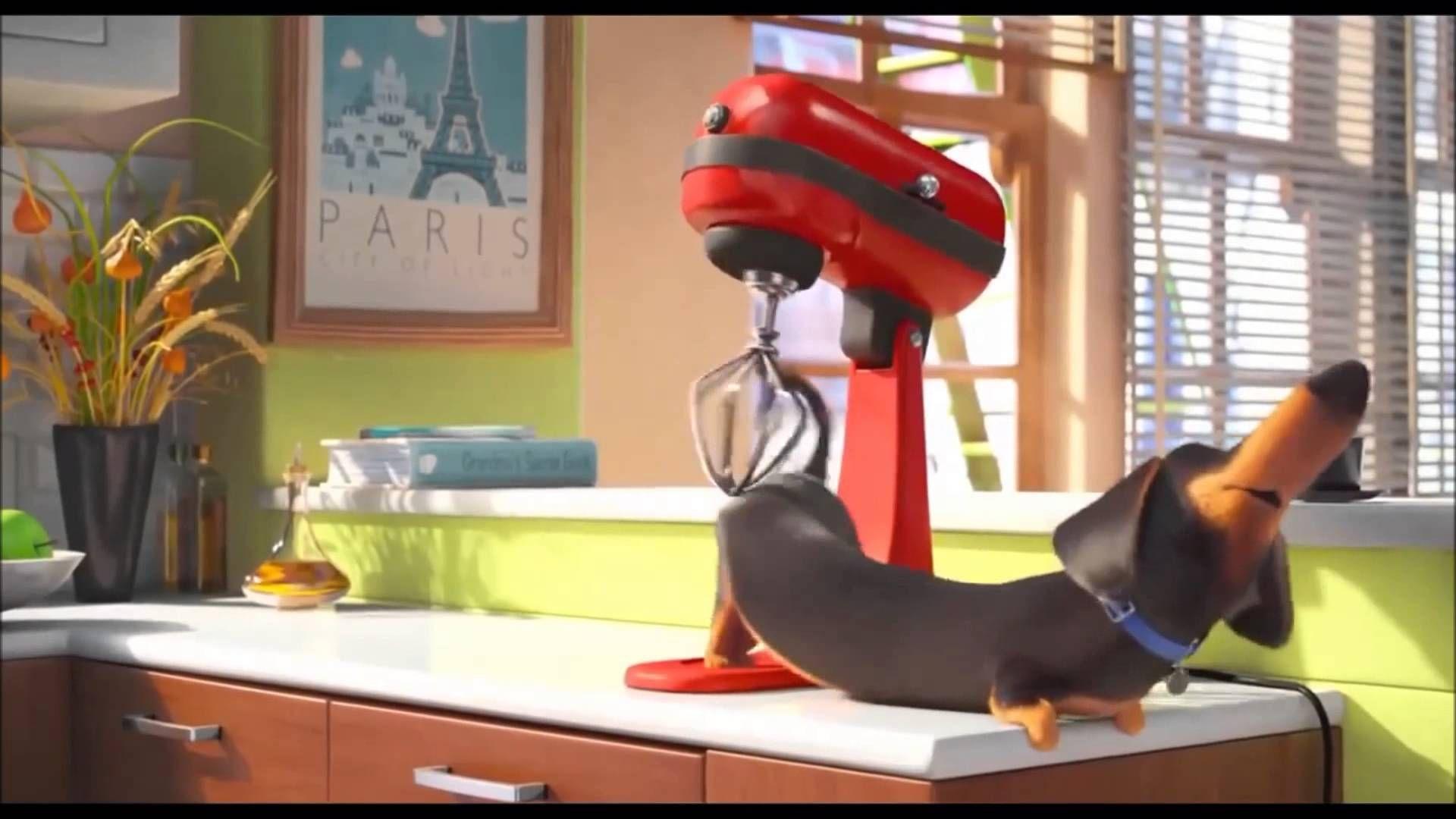 The Best Use Of Your Kitchenaid Secret Life Pets Movie Dog Animation