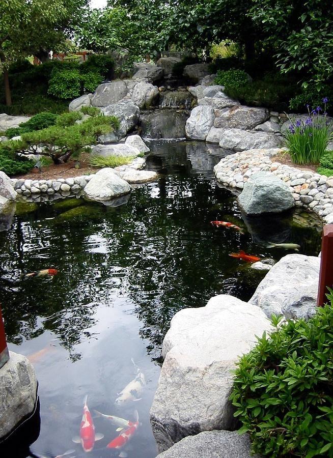 Étang de jardin et koi 751 bassins, étangs paysage Pinterest - Cascadas En Jardines