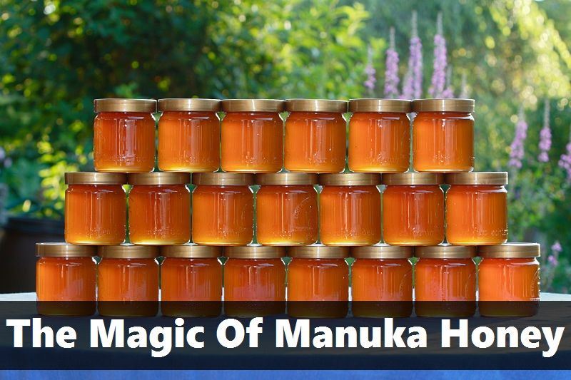 Share this post... In New Zealand, there is a very legendary bush known as the Manuka Bush or the Tea Tree. The honey produced by the bees that pollinate the Manuka Bush is darker, richer and more deeply flavored than other honey. It's also extraordinarily famous for it's healing properties. Read on for more about just what Manuka Honey can do! Want to try Manuka… [read more]