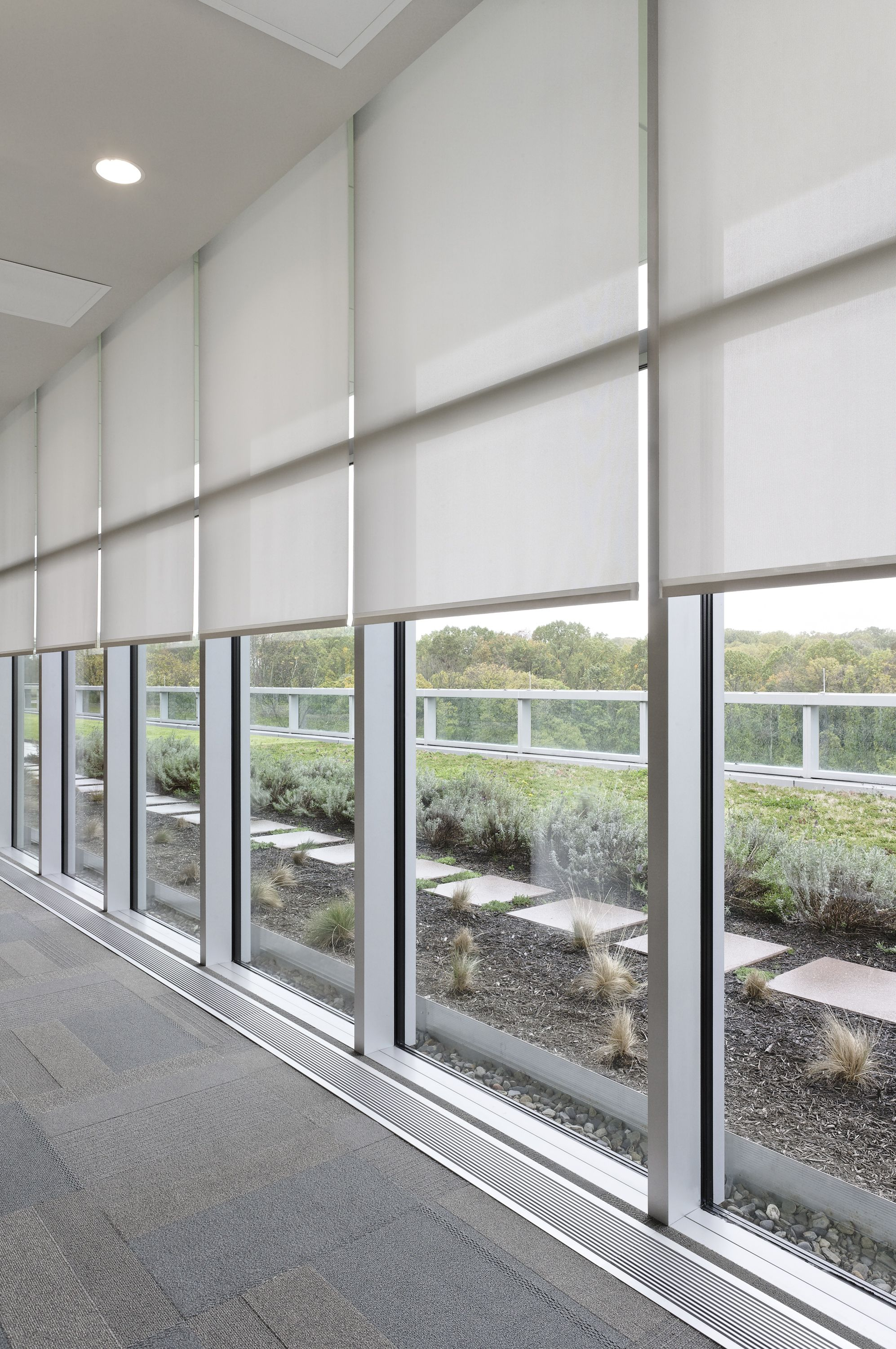 Lutron Motorized Roller Shades Office Blinds Shades Blinds Roller Shades