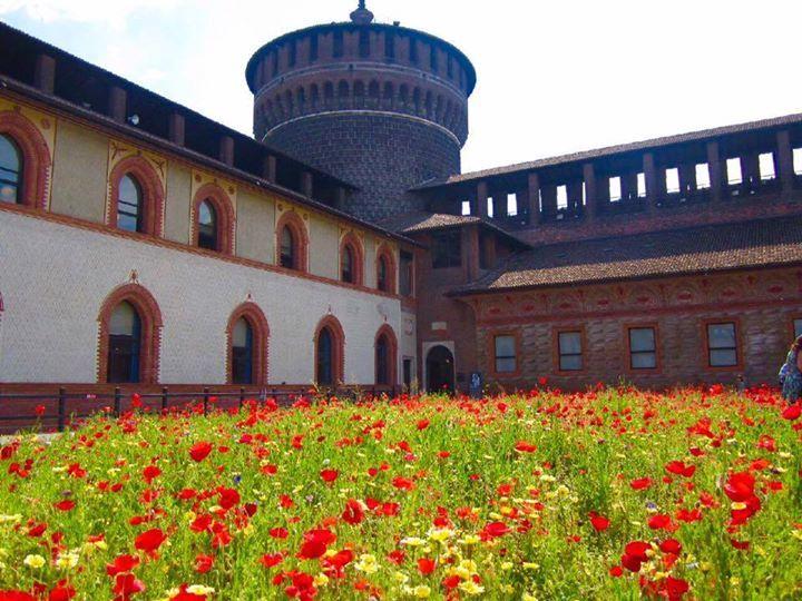 Fiori al Castello Foto di Luigia Rossi #milanodavedere Milano da Vedere