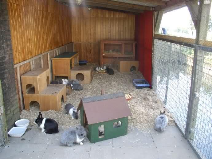 Bilder eurer Kaninchenställe und Außengehege - Kaninchen ...