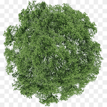 Tree Dill Shrub Tree Top View Green Leafed Tree Leaf Branch Grass Png Trees Top View Tree Photoshop Tree Plan Png