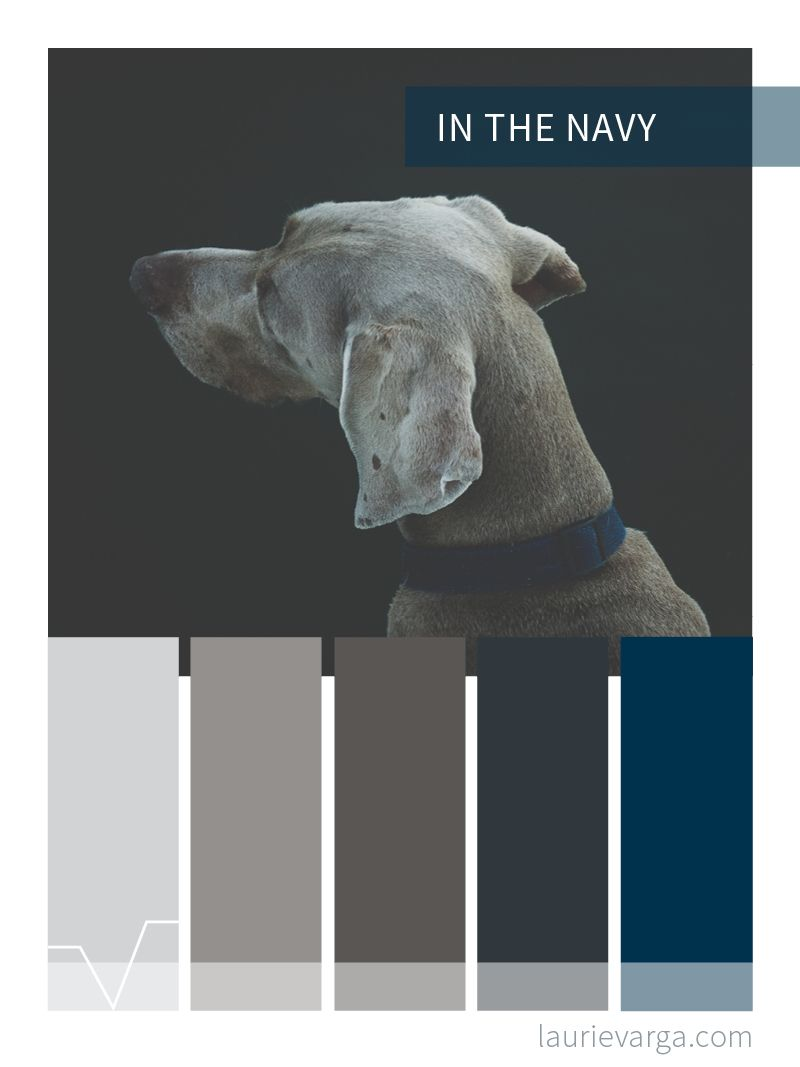 In The Navy A Warm Grey Brown And Blue Color Palette Navy Color Palette Blue Colour Palette Grey Color Palette