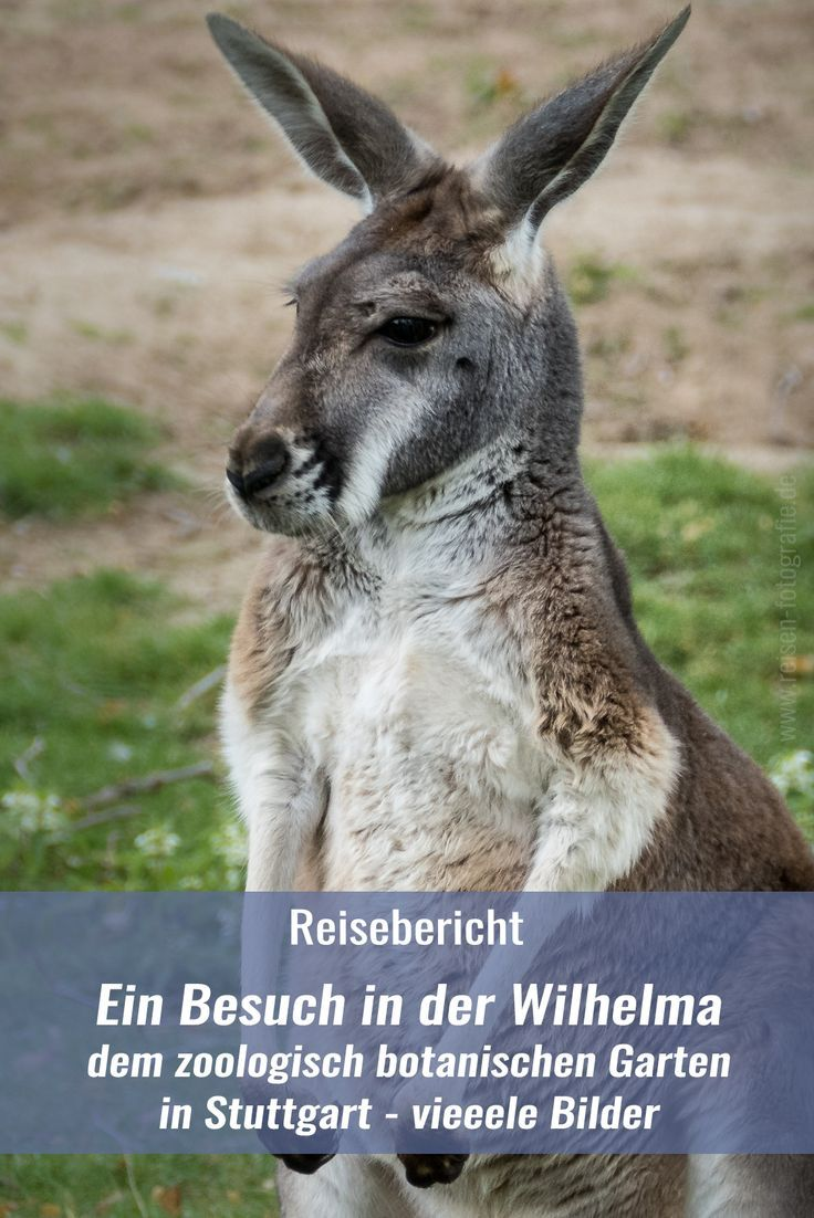 Wilhelma Erster Besuch Im Zoologisch Botanischen Garten