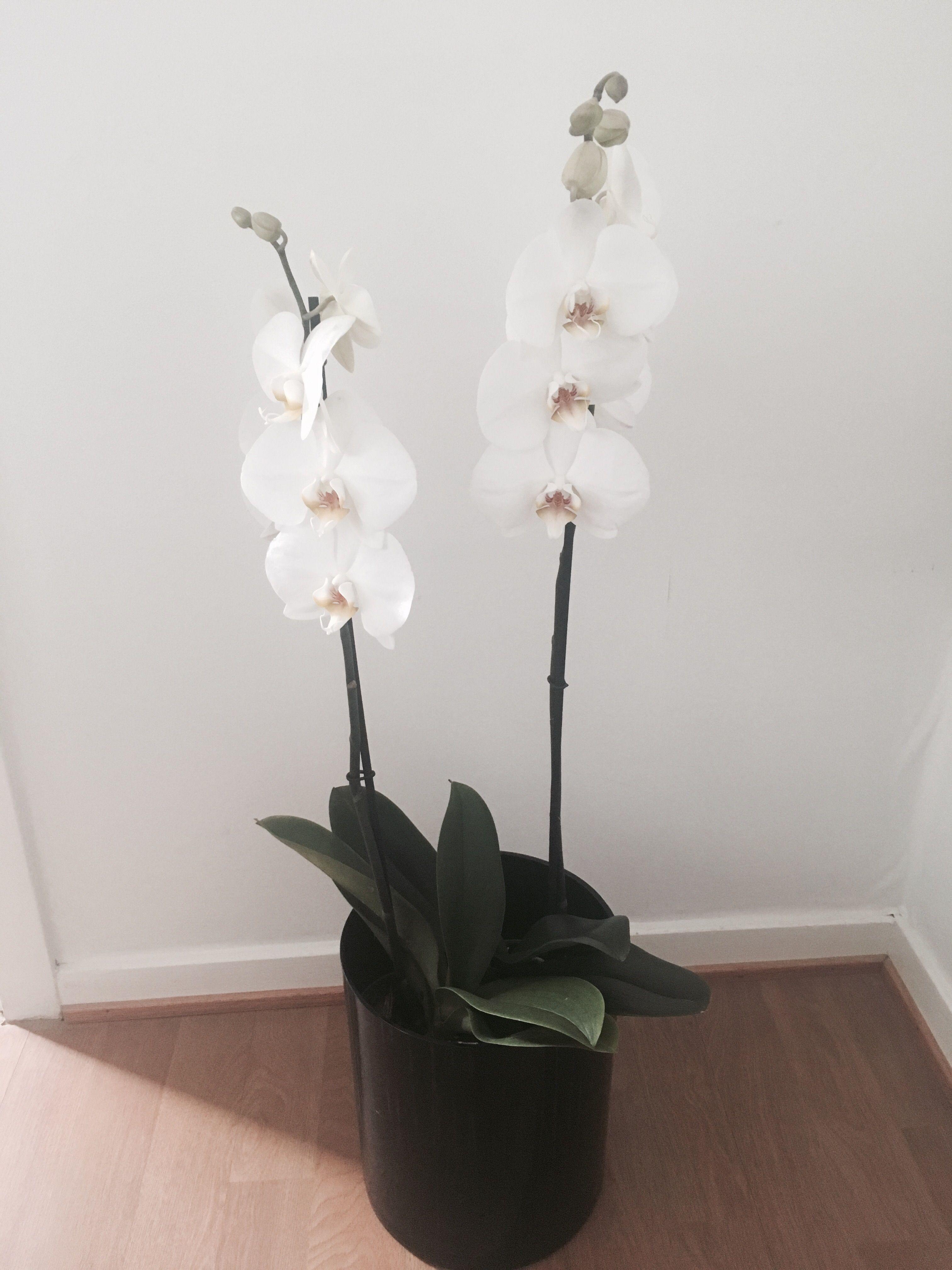Så här sköter du om dina orkidéer på bästa sätt -